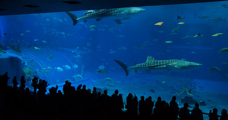 Very Large Aquarium